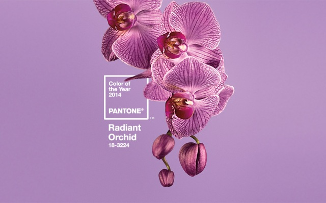 PANTONE 18-3224 Orquídea Radiante